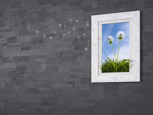 Seeds falling from blowball in picture frame, 3d renderingのイラスト素材 [FYI04334133]