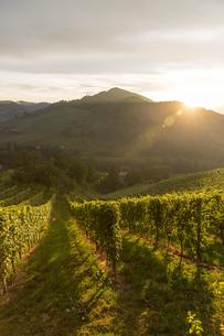 Austria, Styria, Leutschach, vineyards at wine routeの写真素材 [FYI04334246]