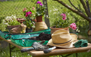 Flowers, hat and gardening tools on tableの写真素材 [FYI04334320]