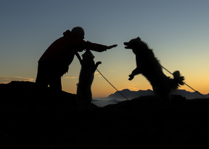 Greenland, Kulusuk, Man caring for dogsの写真素材 [FYI04334456]