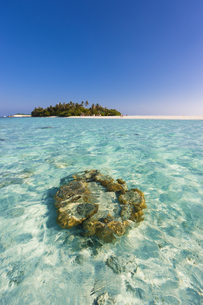 Maledives, Nord-Male-Atoll, Aisen, corals in front of the isの写真素材 [FYI04334588]