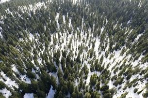 Canada, British Columbia, Rocky Mountains at Mt Seymour Provの写真素材 [FYI04334602]