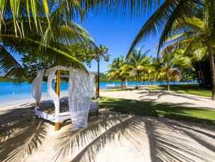 Jamaica, Port Antonio, Errol Flynn Marina, Sunbed under palmの写真素材 [FYI04334659]