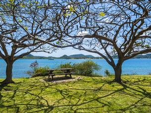 Caribbean, Martinique, view on Sainte-Anneの写真素材 [FYI04334708]