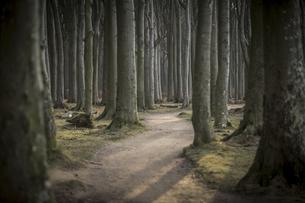 Germany, Nienhagen, forest track at Gespensterwaldの写真素材 [FYI04334762]