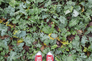 Photographer's shoes on rape fieldの写真素材 [FYI04334775]