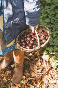 Girl carrying basket with chestnutsの写真素材 [FYI04334784]