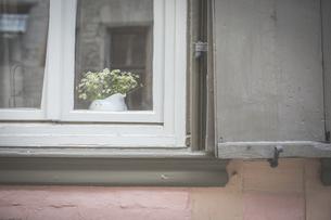 Jar of flowers behind windowpane of residential houseの写真素材 [FYI04334797]