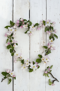 Wreath shaped of apple blossoms on white woodの写真素材 [FYI04334836]