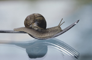 Snail on a forkの写真素材 [FYI04334840]