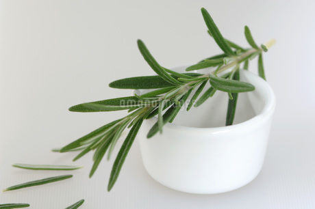 Rosemary twig on cup, close-upの写真素材 [FYI04334878]