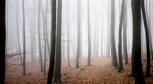 Germany, Hesse, fog in the nature park Taunusの写真素材 [FYI04335025]