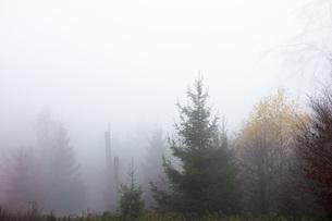 Germany, Hesse, fog in the nature park Taunusの写真素材 [FYI04335028]