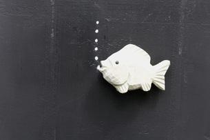 Plastic fish on blackboardの写真素材 [FYI04335066]