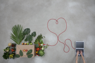 Laptop and vegetables connected through electric wire on graの写真素材 [FYI04335154]