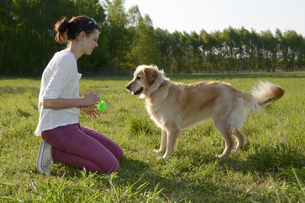Young woman playing with Golden Retriever on meadowの写真素材 [FYI04335389]