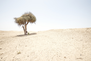 Man sitting alone under tree in the desertの写真素材 [FYI04335472]