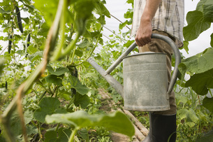 Person in greenhouse holding watering can, side viewの写真素材 [FYI04335498]