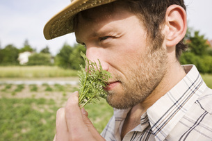 Farmer smelling rosemary, portrait, close-upの写真素材 [FYI04335500]