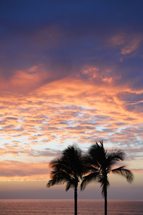 USA, Hawaii, Big Island, Kohala Coast, silhouettes of two paの写真素材 [FYI04335628]