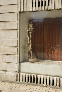 Hungary, Budapest, Shop window and dried plantの写真素材 [FYI04335633]