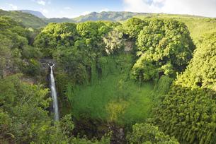 USA, Hawaii, Maui, Haleakala National Park, Makahiku Fallsの写真素材 [FYI04335651]