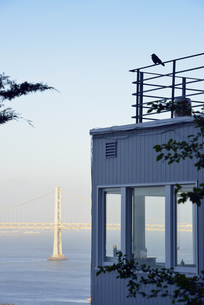 USA, California, San Francisco, bird on roof terrace in fronの写真素材 [FYI04335676]