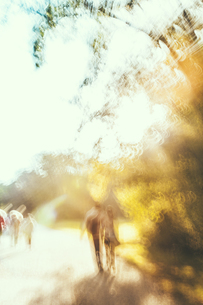 Bulgaria, Sofia, blurred view of people walking in park alleの写真素材 [FYI04335730]