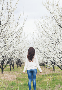 Back view of woman standing in front of orchard with white bの写真素材 [FYI04335739]