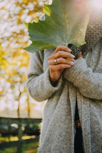 Woman holding autumn leafの写真素材 [FYI04335905]