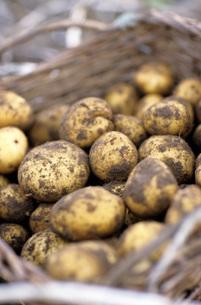 Potatoes in basket, close-upの写真素材 [FYI04335977]