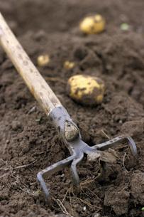 Potato fieldの写真素材 [FYI04335979]