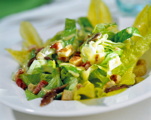 Leaf salad, close-upの写真素材 [FYI04336011]