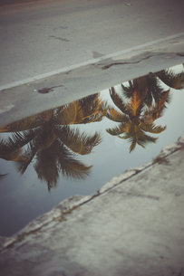 USA, Florida, Key West, palm trees reflecting in a puddleの写真素材 [FYI04336082]