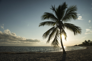 USA, Florida, Key West, palm tree on beach in backlightの写真素材 [FYI04336087]