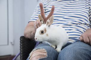 Rabbit on lap of ownerの写真素材 [FYI04336100]