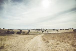 Portugal, Setubal, Field with treesの写真素材 [FYI04336108]