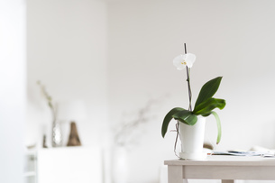 Orchid on table at homeの写真素材 [FYI04336122]