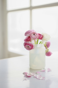 Buttercup flowers in vase, close upの写真素材 [FYI04336214]