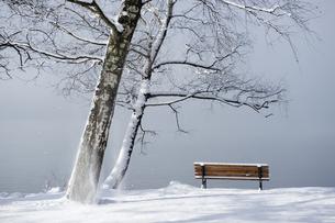 Germany, Bavaria, Lake Kochel, wooden bench on lakeshore, foの写真素材 [FYI04336248]