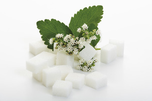 Sugar lumps and stevia leaves with blossom on white backgrouの写真素材 [FYI04336279]