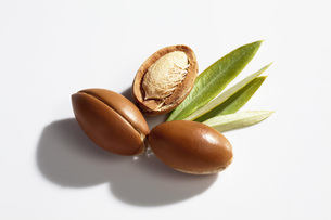 Argan nuts and leaves from Argan tree, Argania spinosaの写真素材 [FYI04336449]