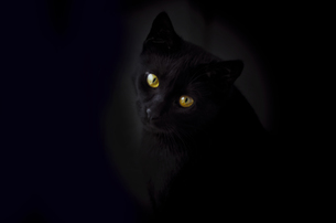 Face of black cat in front of black backgroundの写真素材 [FYI04336519]