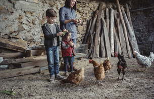 Woman and her children feeding hens with green grapes in a fの写真素材 [FYI04336522]