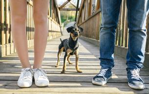 Dog between legs of couple on a bridgeの写真素材 [FYI04336691]