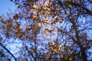 Soap bubble on tree, reflection of Great St Martin in Colognの写真素材 [FYI04336715]