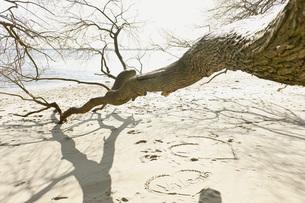 Germany, Hamburg, View of bare tree at beach near Elbe riverの写真素材 [FYI04336791]