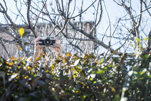 Woman's hands shooting pictures over a hedge with an old camの写真素材 [FYI04336859]