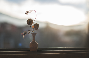 Withered flowers in a vase standing in front of windowpaneの写真素材 [FYI04336861]