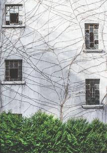 House facade with broken windows and dead creeping plantの写真素材 [FYI04336862]